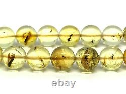 Islamic 33 Prayer Beads WITH INSECT IN EVERY BEAD Baltic Amber Tasbih 16g 15189